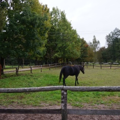 Horses on the Estate, 2