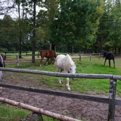 The Horses on the Estate, 3