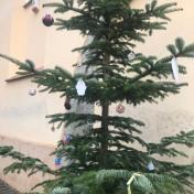 Christmas Tree near Saint John Franciscan Church in Brașov